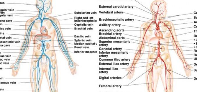 Vascular Physicians
